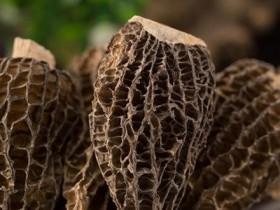 羊肚菌煲鸡的功效,鲜羊肚菌多少斤能晒干一斤