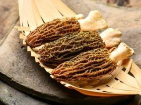 野生羊肚菌有根吗,野生羊肚菌和种植羊肚菌的功效区别