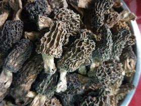 羊肚菌如何吃好,种植羊肚菌的功效