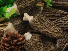 新鲜羊肚菌能储存多久,青海羊肚菌多少钱一斤
