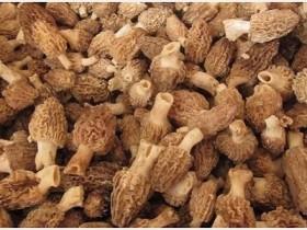 新鲜羊肚菌炖鸡味道如何,新鲜羊肚菌可以保存多久